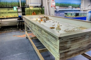 Danial Island Architectural Woodwork (33)